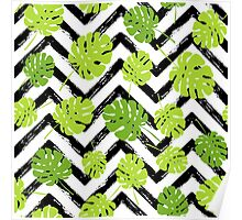 Summer tropical Monstera tree leaves pattern Poster