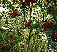 Rowan Jungle by evhiggins