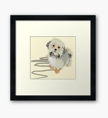 fluffy little shih tzu Framed Print