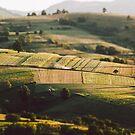 Morning field by Hudolin