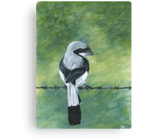 Shrike on a Wire Canvas Print