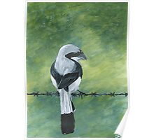 Shrike on a Wire Poster