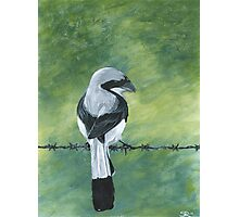 Shrike on a Wire Photographic Print