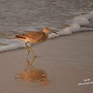 Splish Splash by Sandy Woolard