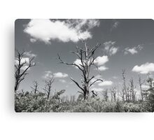 The dead wood Canvas Print