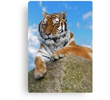 Tiger Canvas Print
