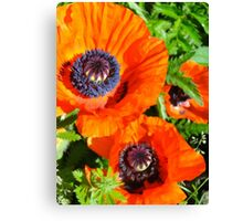 Wild Poppies - Oil Painting Style I Canvas Print