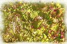 Garden Lettuce - Green Gold by MotherNature