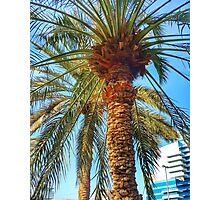 Palm Tree skyscape Photographic Print