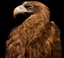 Golden eagle head portrait  by Arletta Cwalina