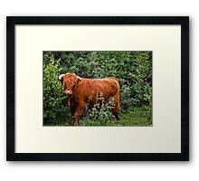 Hothfield Highlander Framed Print