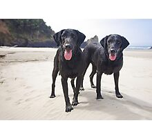 Sand Dogs Photographic Print