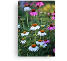 Dancing Cone Flowers  Canvas Print