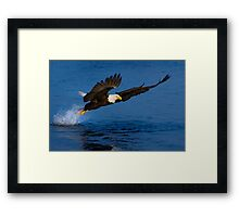 Graceful flight Framed Print