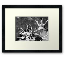 The busy bee Framed Print