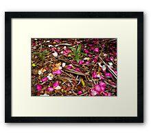 Camellia Petals Framed Print