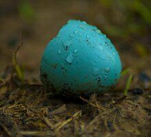 Hatched Robin's Egg by BLaskowsky