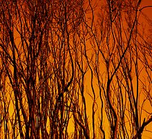 Scorched Branches by bexilla