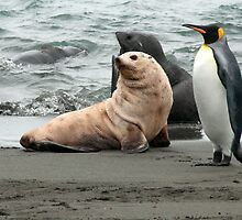 Seals and King Penguin by Marylou Badeaux