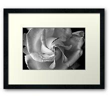 A spiraled rose Framed Print