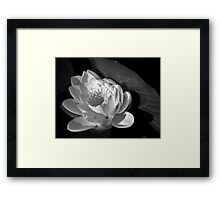 The white lotus Framed Print
