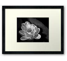 The white lotus Framed Print