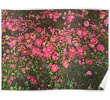 Fallen Flowers Poster