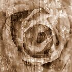 Tote Design, Rose collage in Sepia by Lozzar Flowers & Art