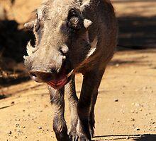 The Giggling Hog by gruntpig