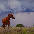 Stormy Riff by kurrawinya