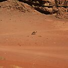 Wandering Camel by KerryPurnell