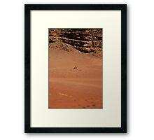 Wandering Camel Framed Print