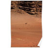 Wandering Camel Poster