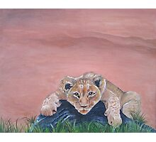 Lazy Lion Cub Photographic Print