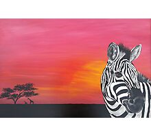 Sunset Zebra Photographic Print