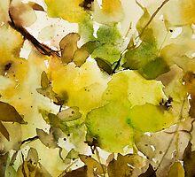 green apples by annemiek groenhout