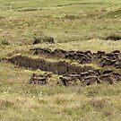 Peat Cutting by Sue Robinson