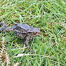 Toad walking by Sue Robinson