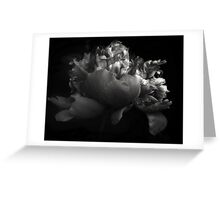 Shades of a Peony Greeting Card