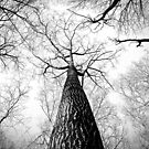 Lonely Branches by TilenHrovatic