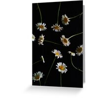 Daisies for dayzzz.... Greeting Card