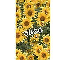Sugg Sunflowers Photographic Print