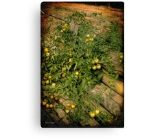 Grape Tomato Canvas Print