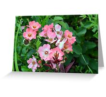 Small pale pink flowers and green leaves. Greeting Card