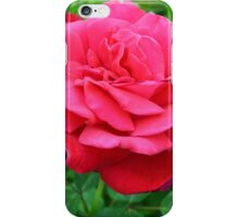 Pink rose close up and green leaves. iPhone Case/Skin