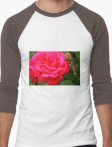 Pink rose close up and green leaves. Men's Baseball ¾ T-Shirt