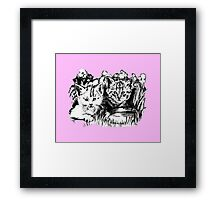 Pink Baby Cats  Framed Print