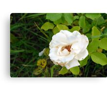 White rose and green leaves pattern. Canvas Print