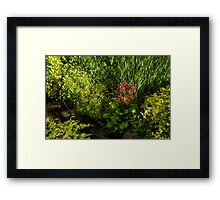 Gardening Delights - Miniature Creek with Red Primrose Framed Print