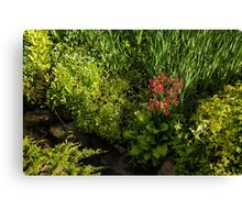 Gardening Delights - Miniature Creek with Red Primrose Canvas Print